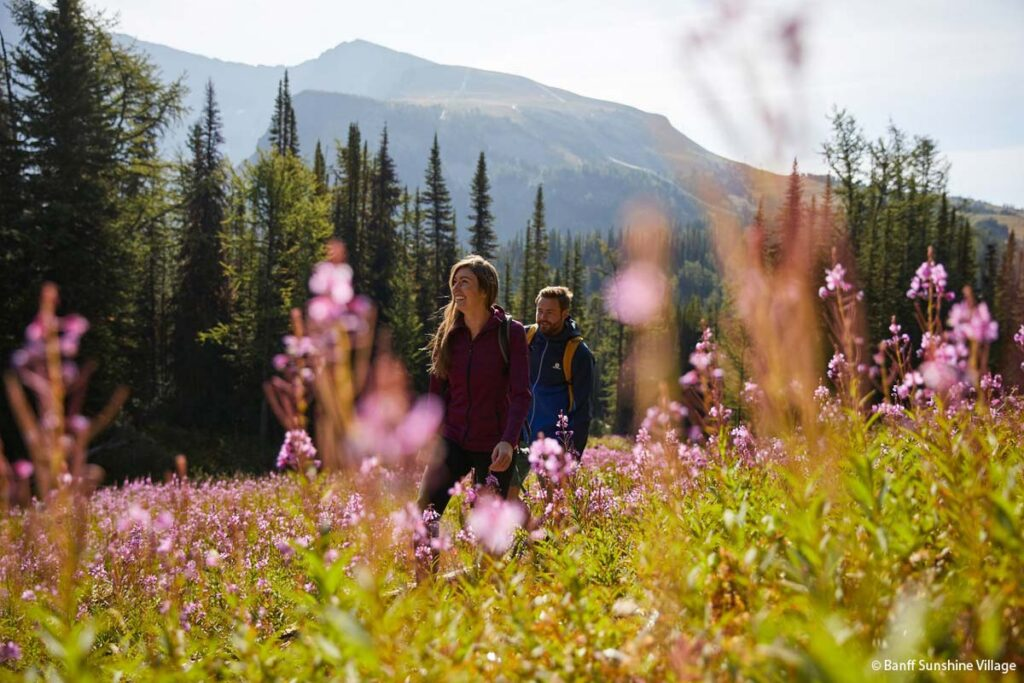 Walking through a field of spring alpine flowers at Sunshine Meadows in Banff National Park