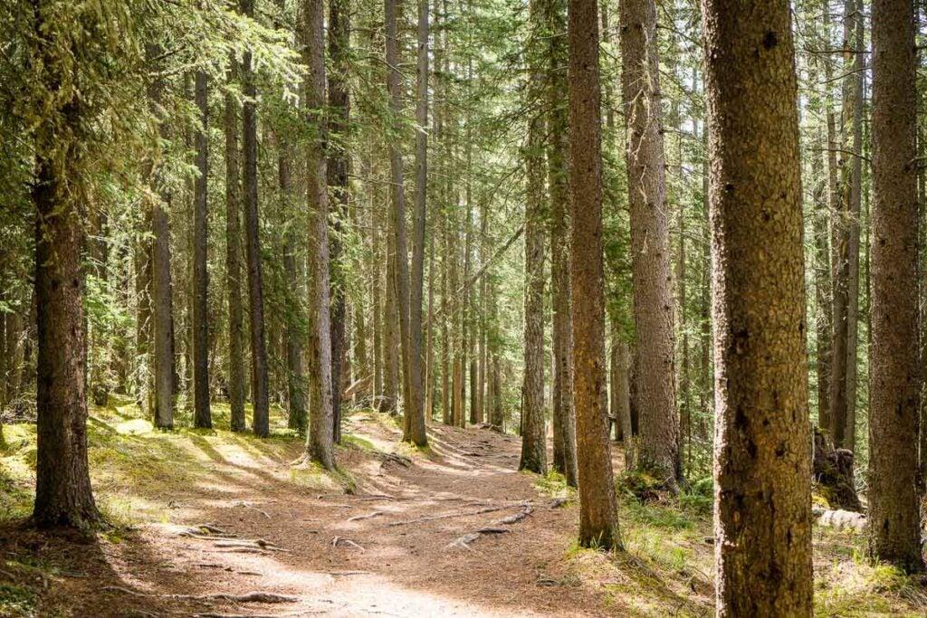 Banff National Park Hikes - Stewart Canyon Trail