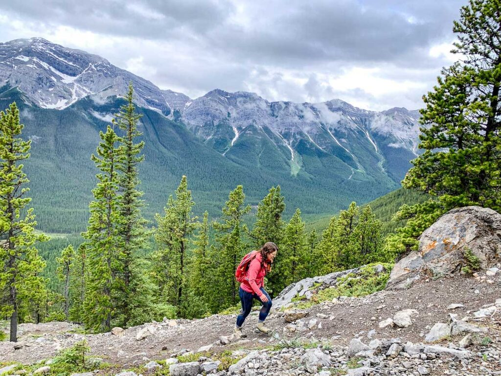 Emerging from the forest on the EEOR hike near Canmore gives excellent views of Spray Valley Provincial Park