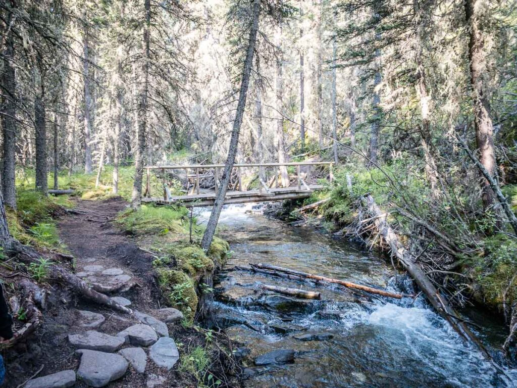 The Wind Ridge Trail has many river crossings within a deep forest setting