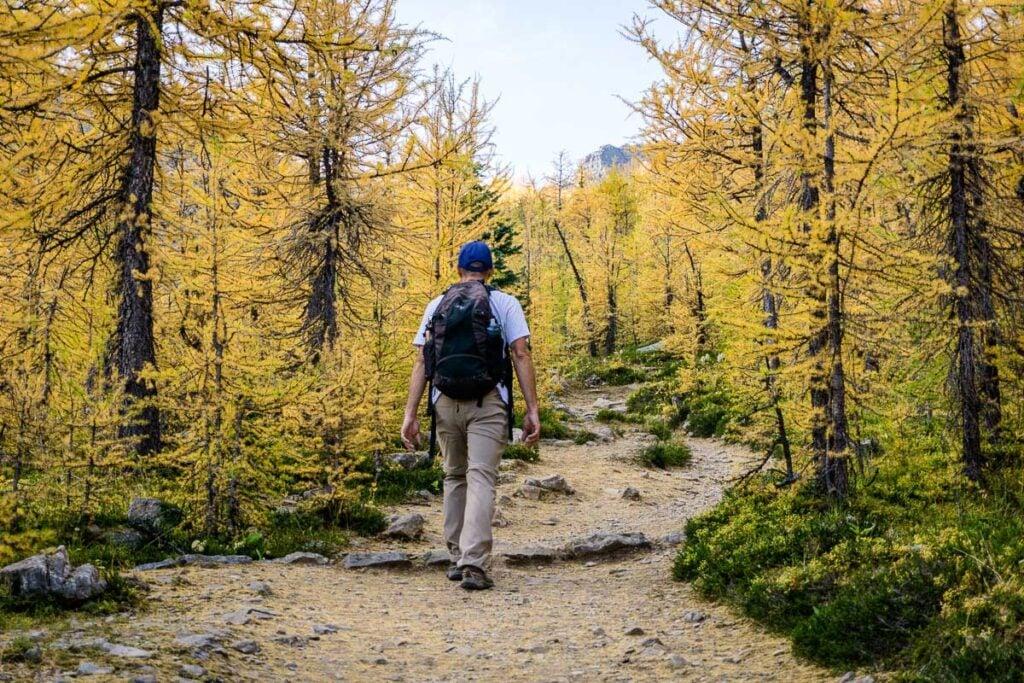 hiking saddleback mountain in September rewards you with many beautiful larch trees