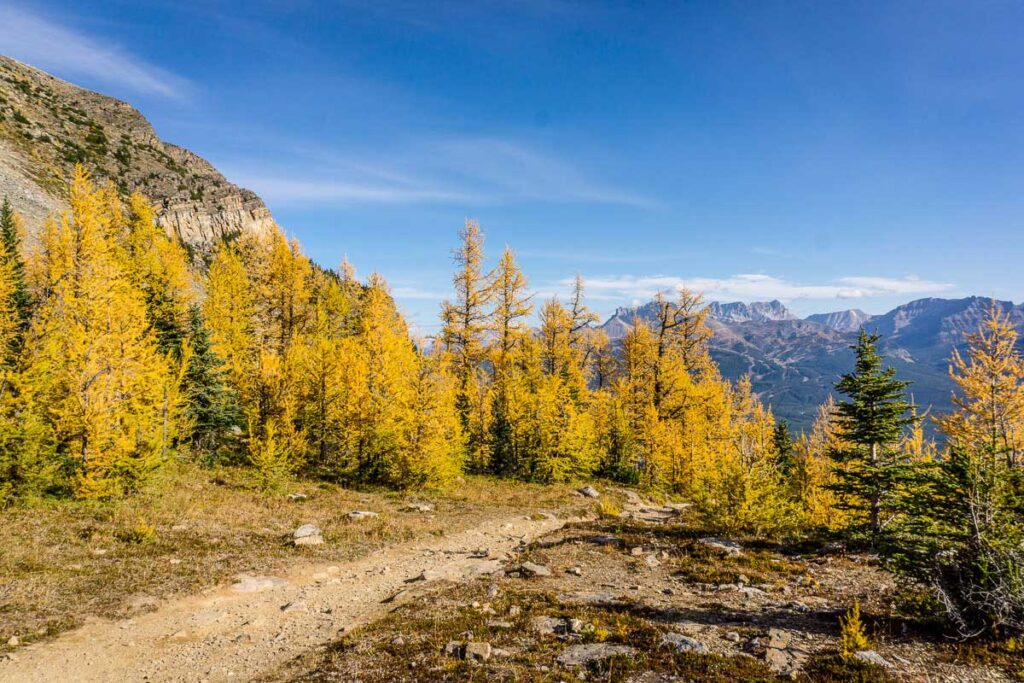 Lake Louise Larch hikes in September