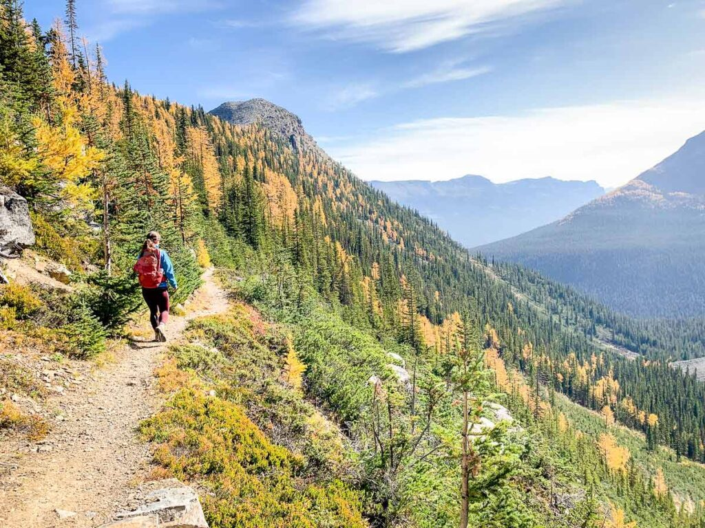 Want a great larch tree hike in Lake Louise? Try connecting the Sheol Valley hike and the Saddleback Pass Trail
