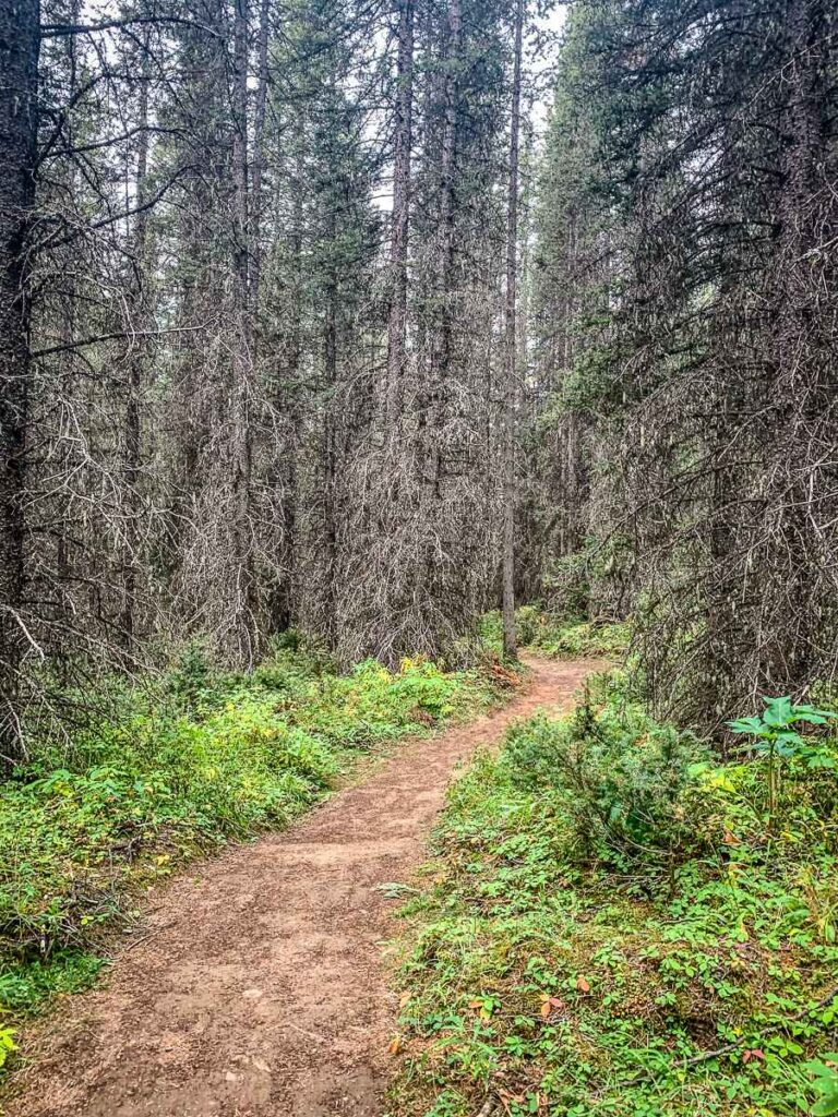Lush forest along the High Rockies Trail an easy hiking trail in Kananaskis Country