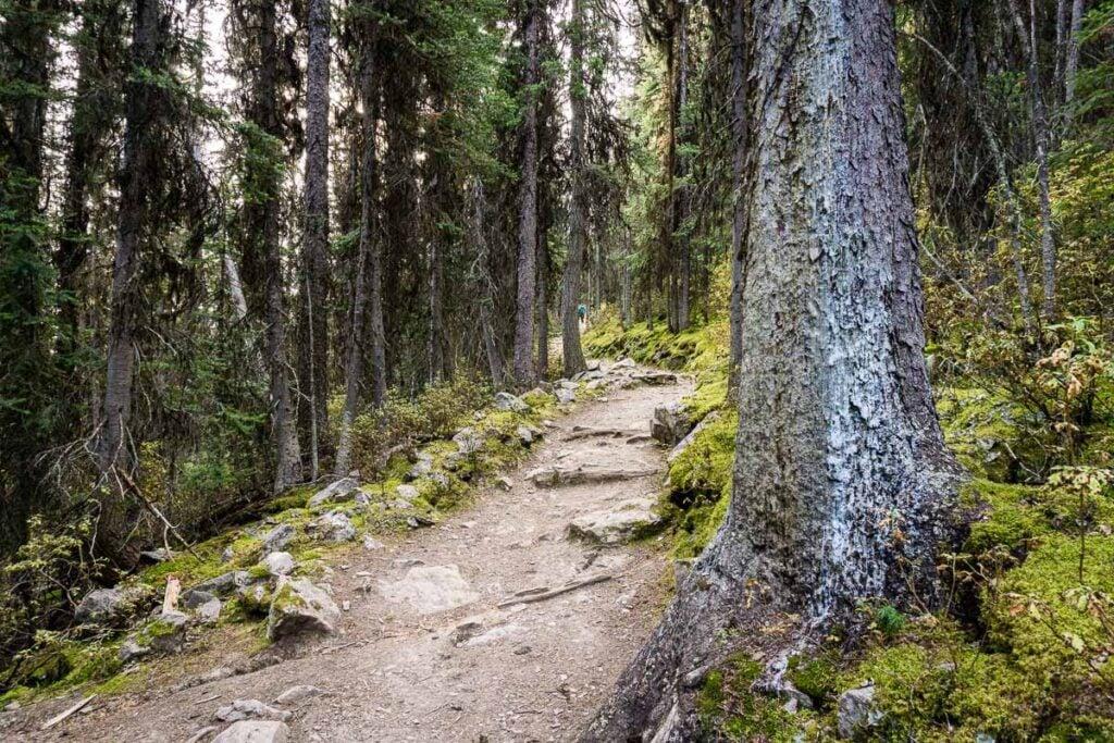 The Saddleback Mountain Pass trail is very beautiful