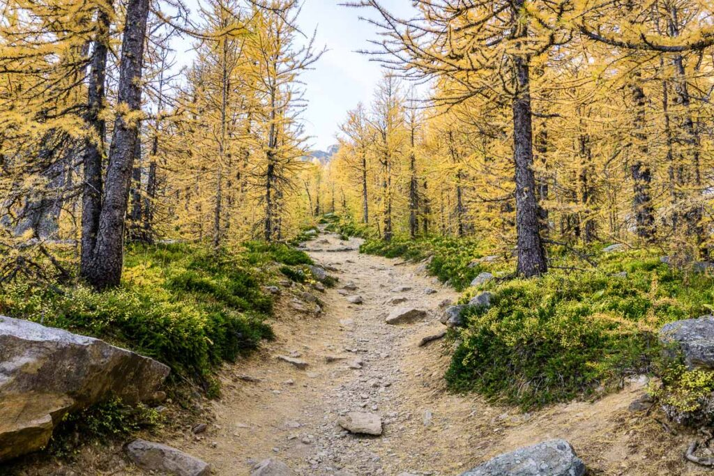 What are the best alternative hikes to Larch Valley in Lake Louise?