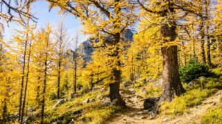 The Saddleback Pass Trail is an excellent alternative to Larch Valley in Lake Louise Canada