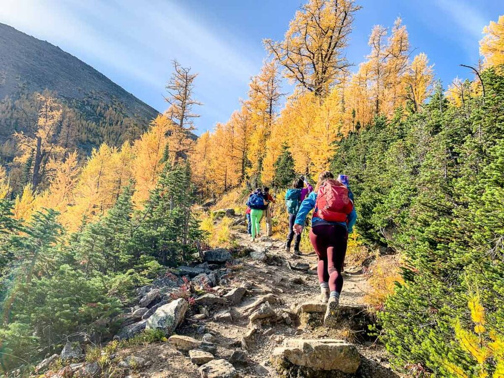 Many people hiking saddleback pass trail to enjoy the larch trees in September