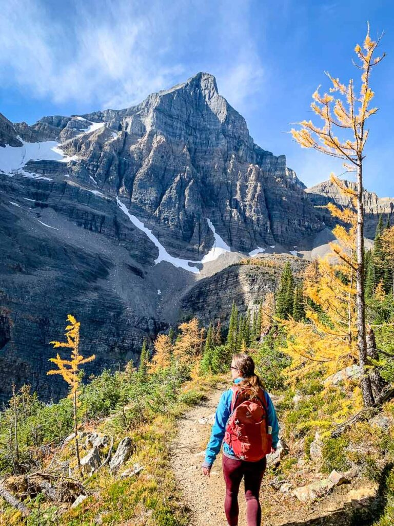 A hiker enjoys larch trees and looming views of Mount Haddo whike hiking Sheol Valley in Lake Louise