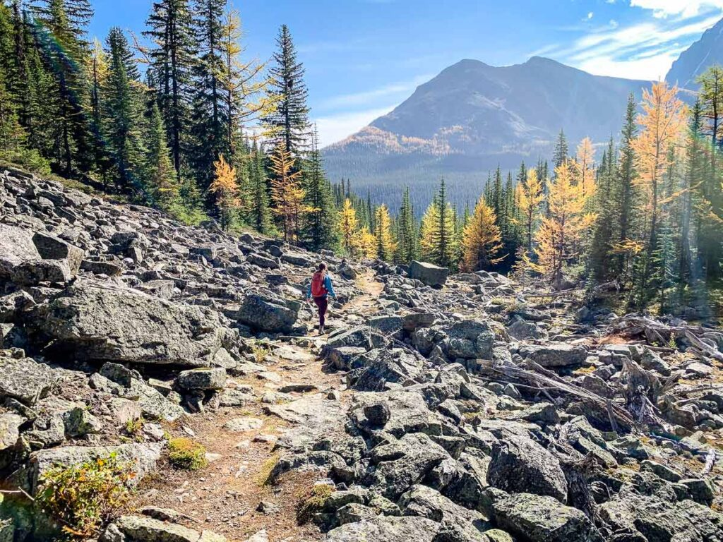 September larch hikes in Lake Louise