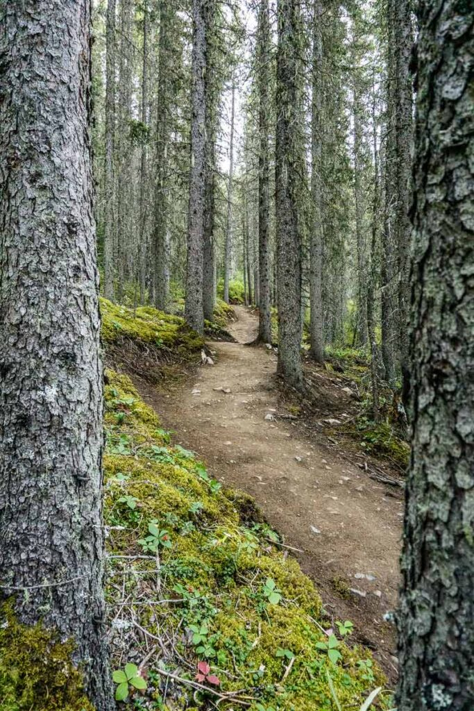 hiking miners peak through an evergreen forest