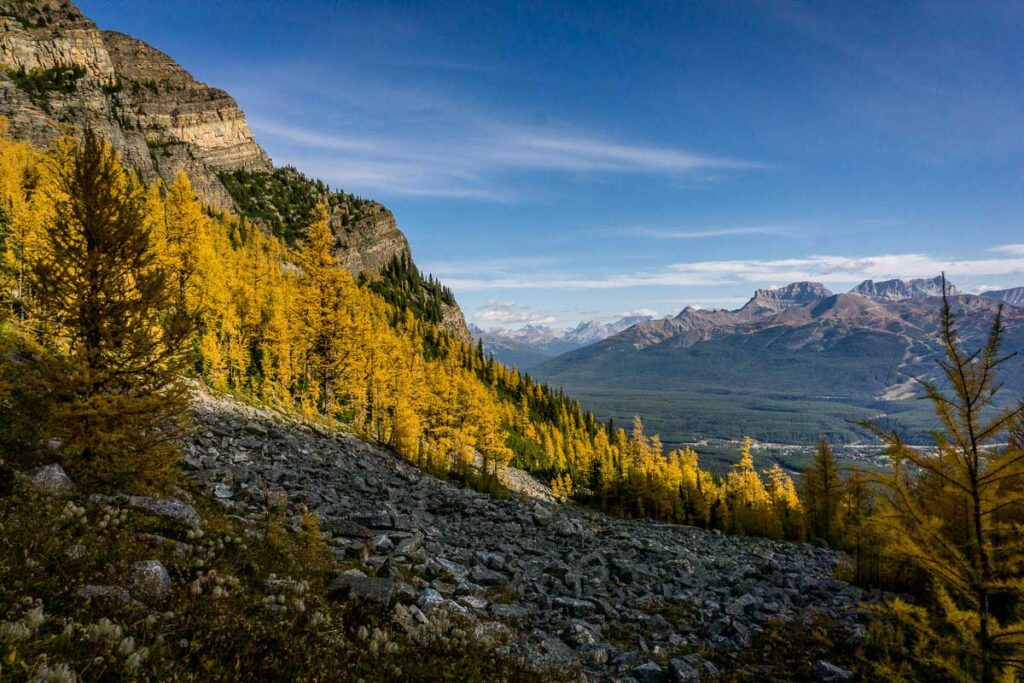 Images of larch trees - Fairview Mountain - Banff National Park