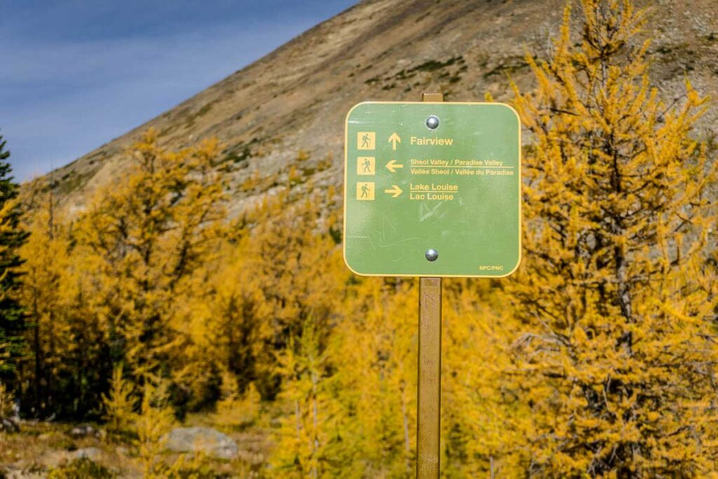 Lake Louise hiking trail sign in front of a stand of golden larches