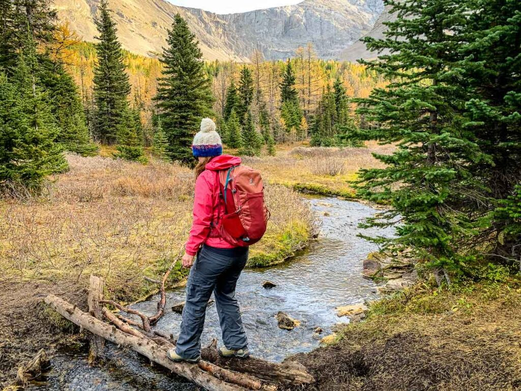 Are there easy hikes to see larches in Alberta?