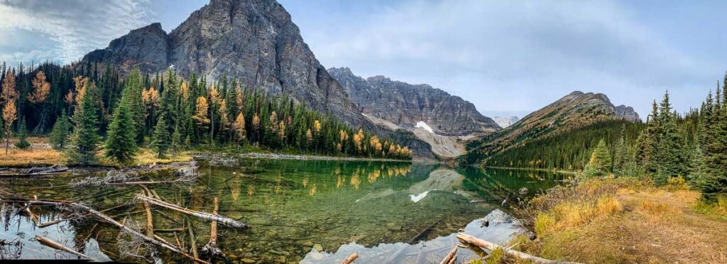 Reflection images of larch trees - Taylor Lake - Banff, Canada