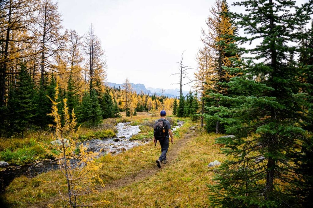 If you hike to Taylor Lake for the larch trees, don't miss the short extension to Panorama Ridge