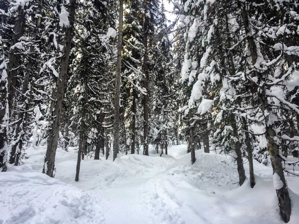 winter hikes banff - Fairview Lookout trail