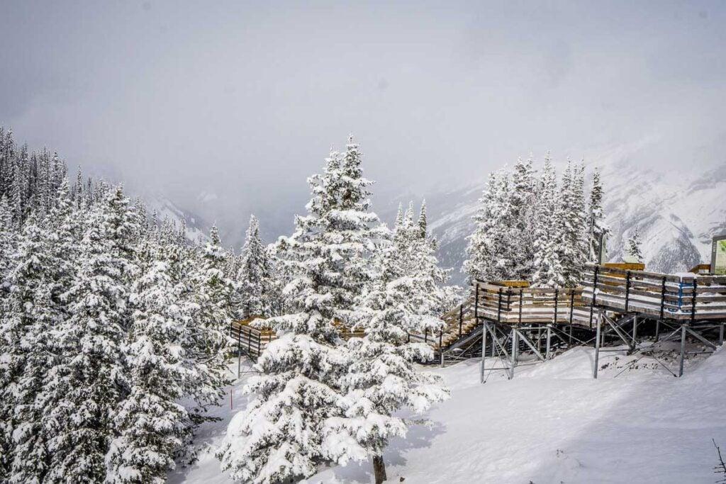 Boardwalk on Sulphur Mountain - winter walks Banff