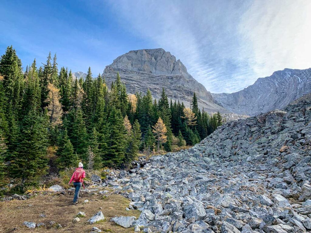 What should I wear on Alberta larch tree hikes?