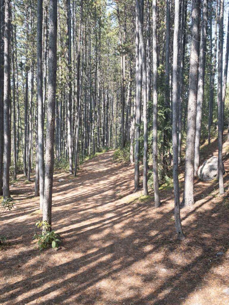trail to Herbert Lake in Banff National Park