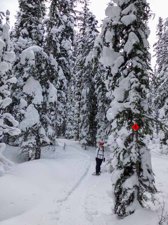 Things to do in Kananaskis in December - Elk Pass Snowshoe Trail