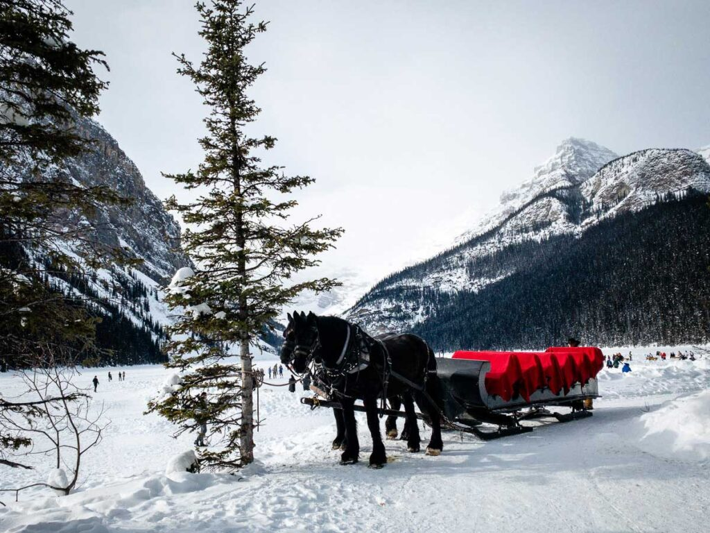 sleigh ride at Lake Louise in January