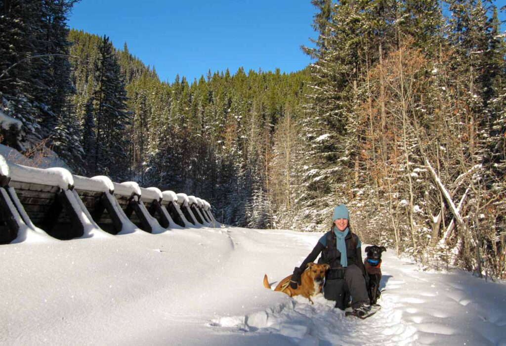 A December snowshoe with dogs at the Penstock Loop Trail in Kananakis Country