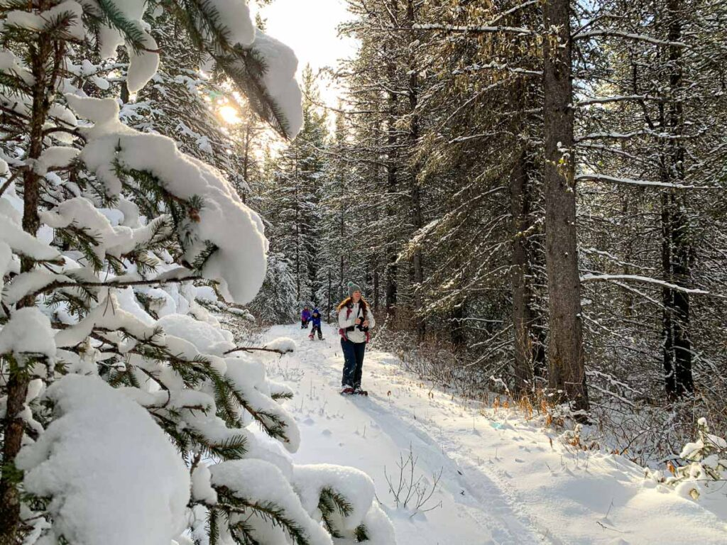 The Canyon snowshoeing trail in Kananaskis is short and easy - great for kids