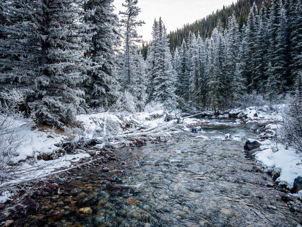 Frost covered trees line the shores of 40 Mile Creek. Enjoy this scenery on the Cascade Amphitheatre winter hike from Norquay ski area in Banff, Canada