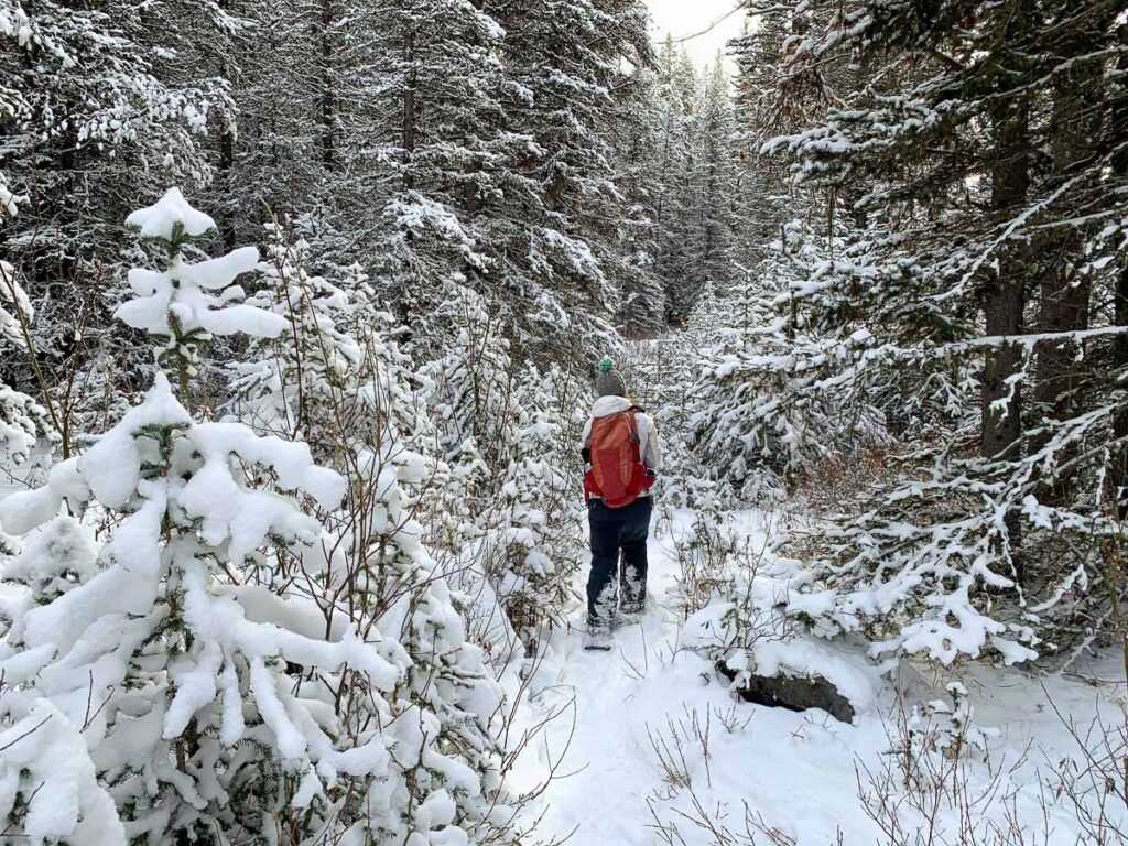 A beautiful winter scene on the Canyon snowshoe trail in Kananaskis