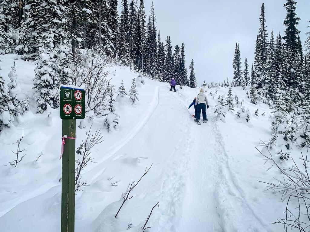 easy kananaskis snowshoeing on Shark Lake Trail