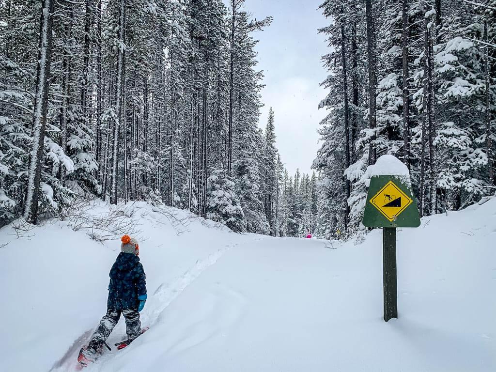Torpor loop - easy snowshoe trails kananaskis