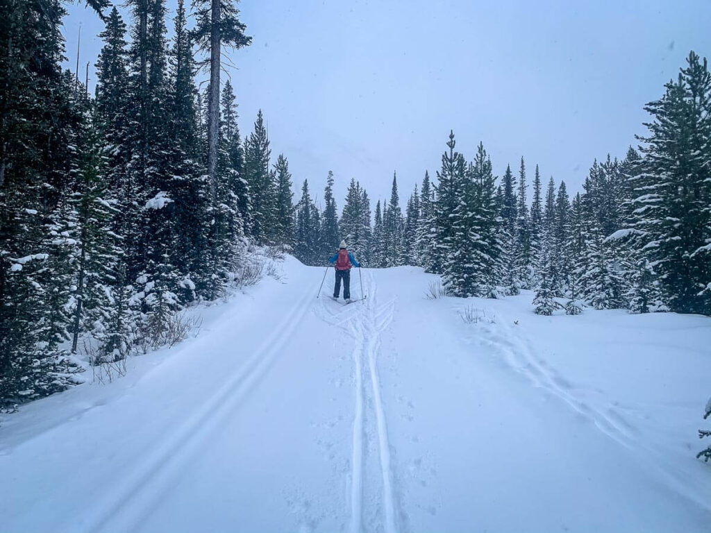 A woman cross-country skiing uphill in the Mt. Shark day use area of Kananaskis, Alberta