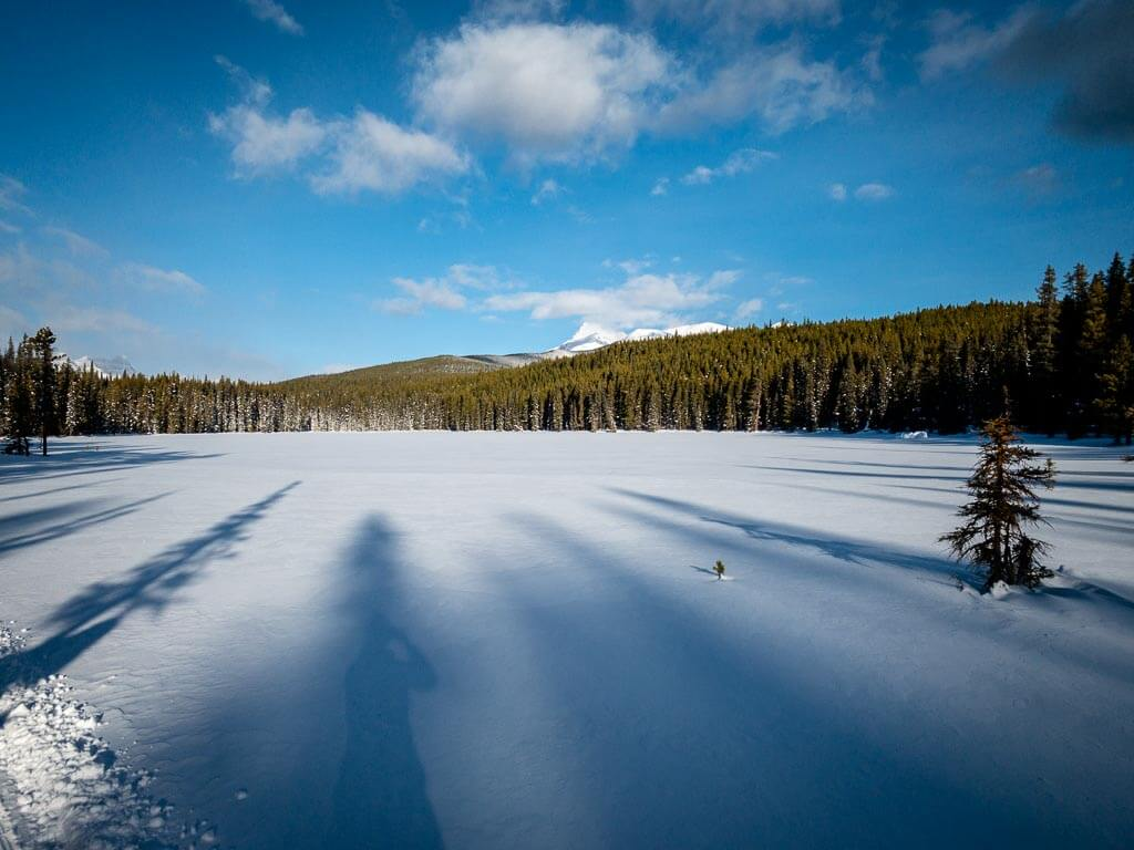 Cross-country skiing in January in Banff on the Hector Trail in the Pipestone day use area.