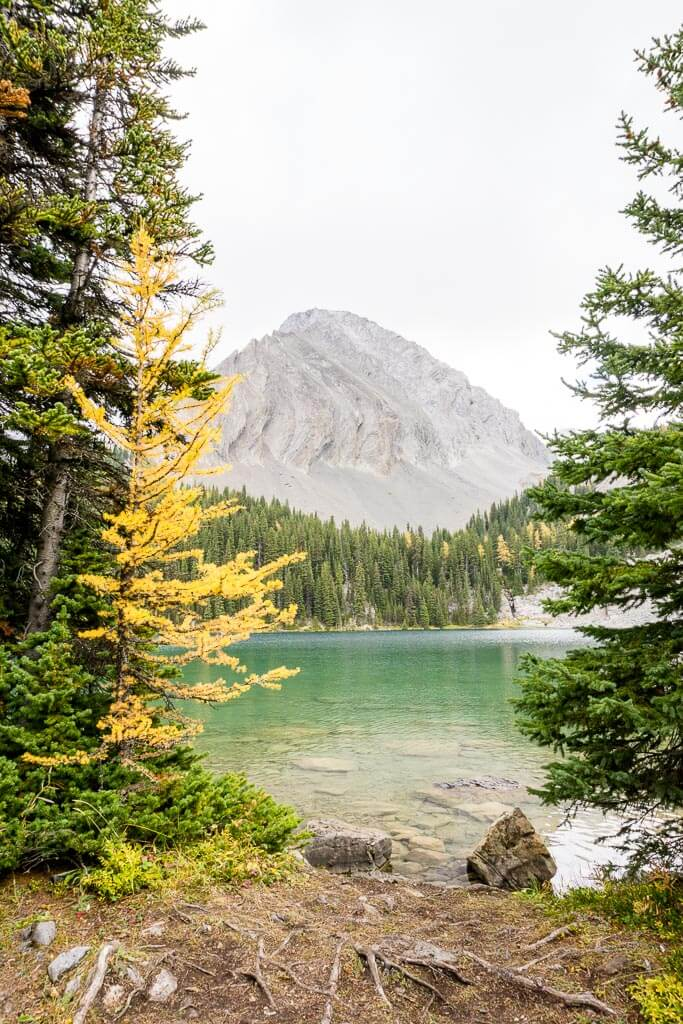 There are better larch hikes in Kananaskis, but Chester Lake has some larch trees in very scenic locations