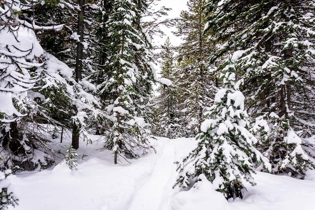Parks Canada doesn't publish a Cascade Amphitheatre trail report