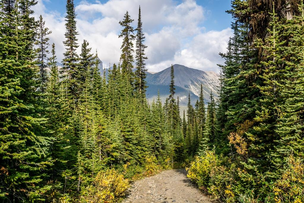 The first half of the Chester Lake hike is through a beautiful evergreen forest