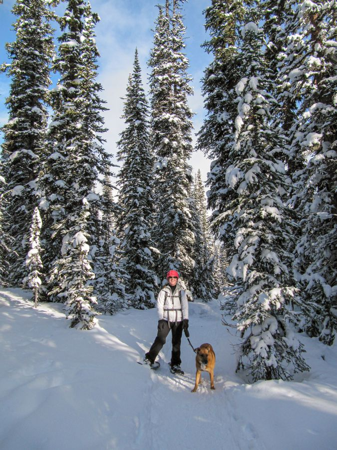 Dogs are allowed on-leash on the Chester Lake snowshoe trail