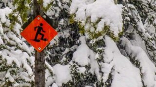 Easy Snowshoeing in Kananaskis Web Story Cover