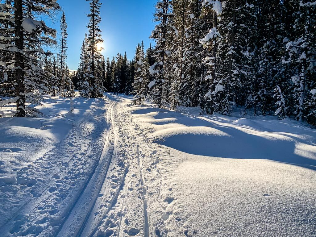 Hector Trail is a 3km long easy Banff cross-country ski trail in the Pipestone area near Lake Louise