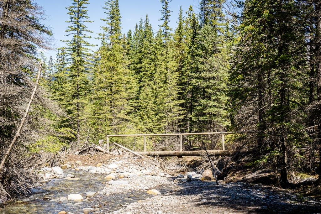 Heart Creek is an easy day hike in Kananaskis
