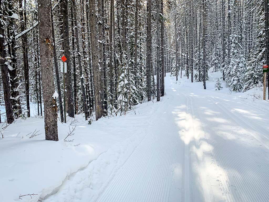 Snowshoe trail crossing cross country ski trail in Kananaskis