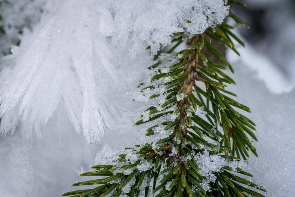 While snowshoeing Shark Lake Trail look for interesting ice crystal formations on the trees