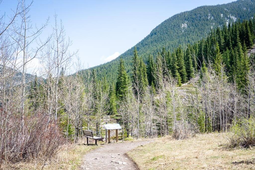 The Heart Creek Trail is a beautiful spring hike in Kananaskis