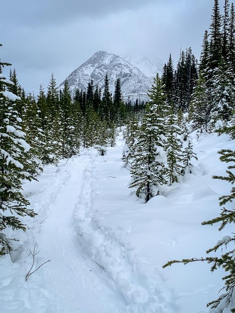 The views of Mt. Shark from the Shark Lake snowshoe trail in Kananaskis in January