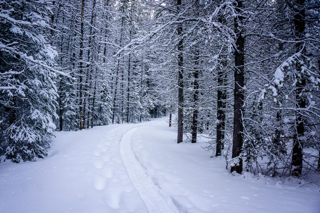The Torpor Snowshoe Trail is beautiful after a recent snowfall