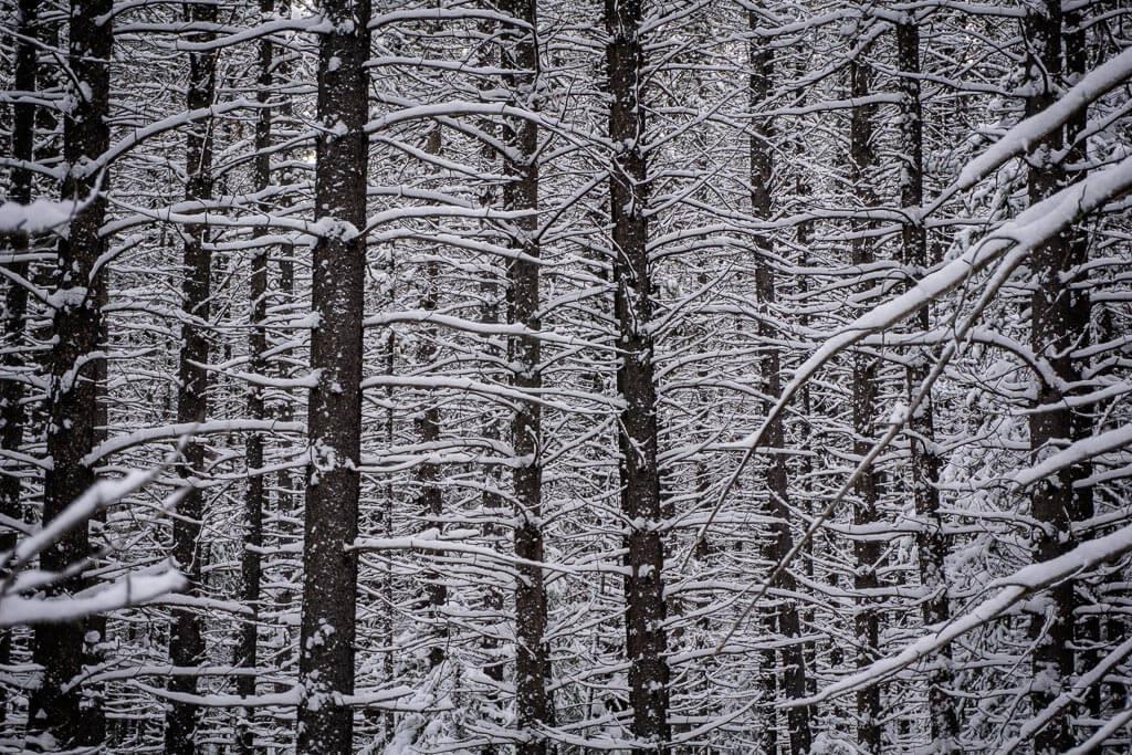 Kananaskis winter scenery - Torpor snowshoe trail near the Kananaskis Lakes