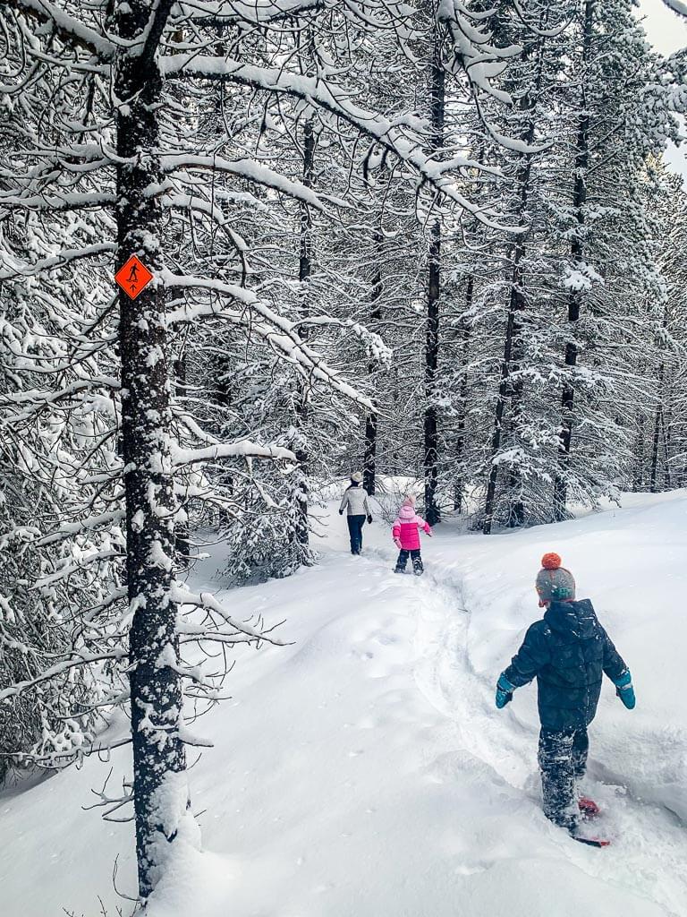 The new Torpor Loop is a kid-friendly Kananaskis snowshoe trail