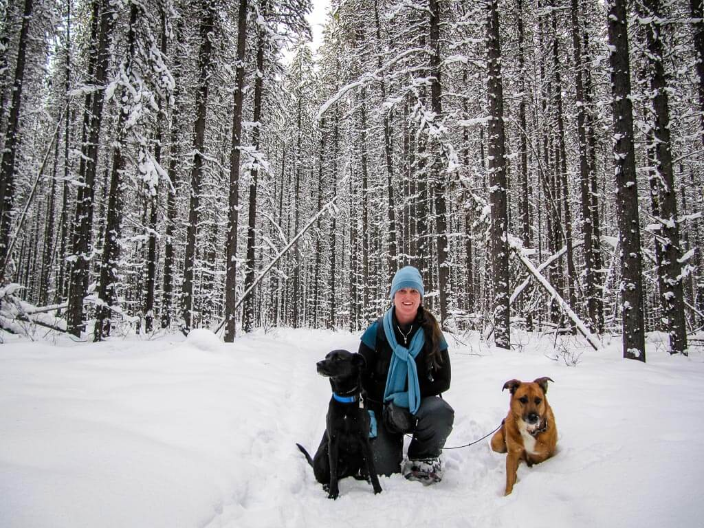 snowshoeing in Banff with dogs