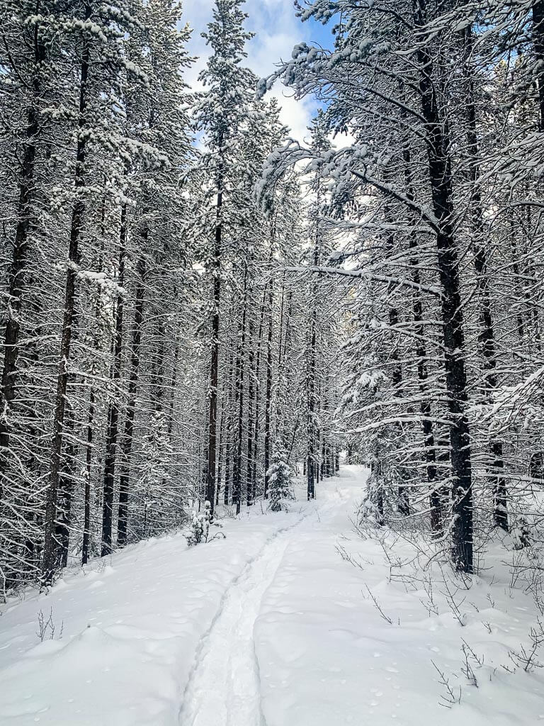 Snowshoeing in Kananaskis can feel like walking in a real-life snowglobe